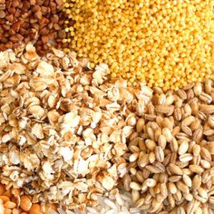 Зерновые и зернобобовые культуры на корм скоту и птице