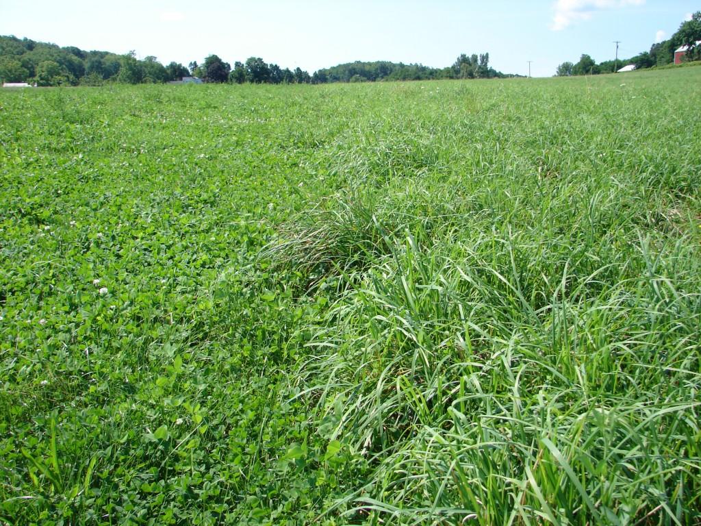 Описание многолетних трав